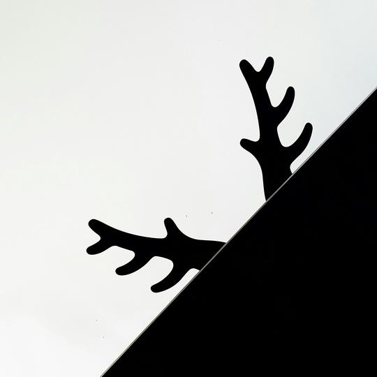 Bois-rabito-cover
